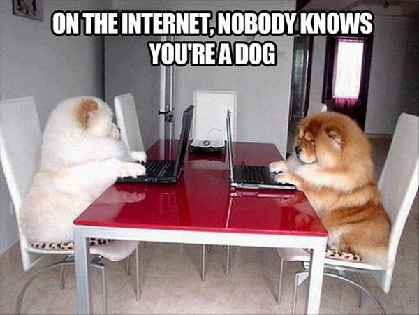 On The Internet, Nobody Knows You're A Dog - funny animal picture