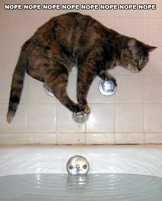Nope - funny cat picture - not taking a bath