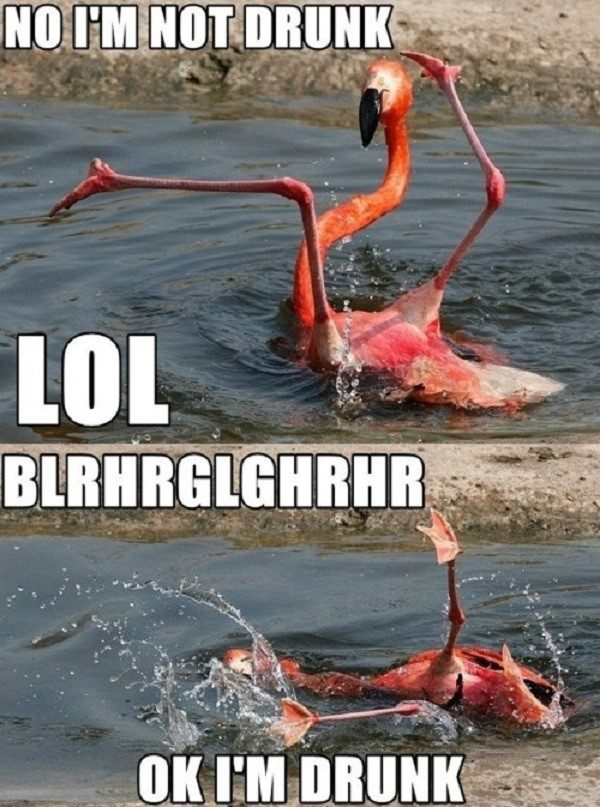 Drunk Flamingo - funny caption photo