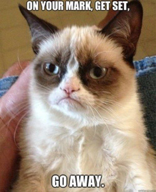 On Your Mark, Get Set, Go Away. - grumpy cat meme