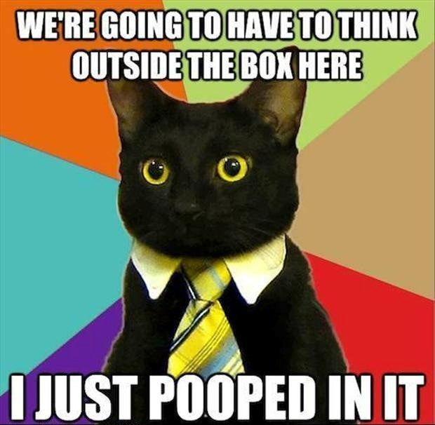 Think Outside The Box - Funny Business Cat Meme - Caption Photo