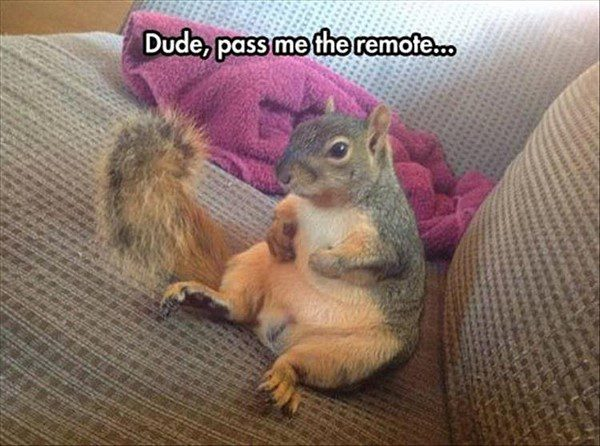 Dude Pass The Remote - Funny Squirrel Picture