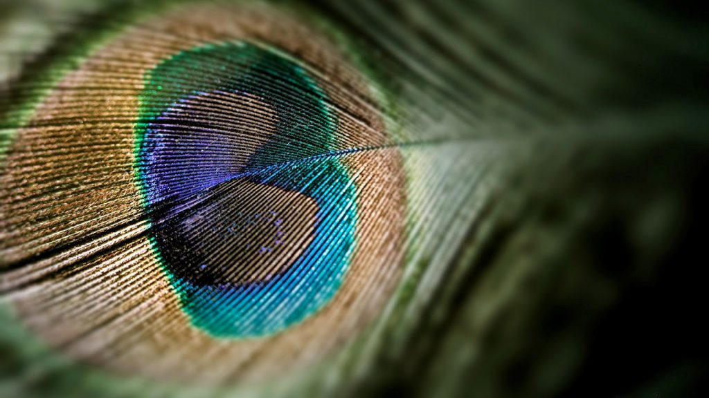 Cool Peacock Feather - HD Tablet Wallpaper Background