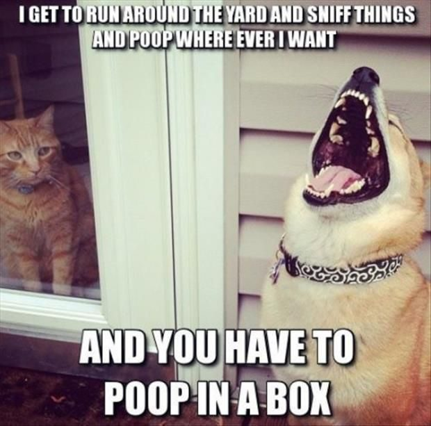 Poop Where I Want - Funny Picture
