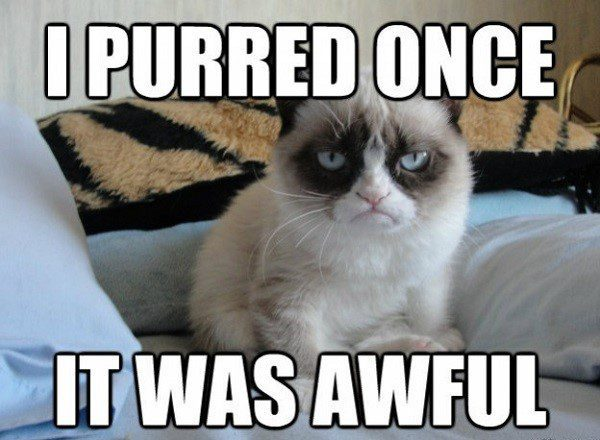 I Purred Once, It Was Awful. - Grumpy Cat Meme