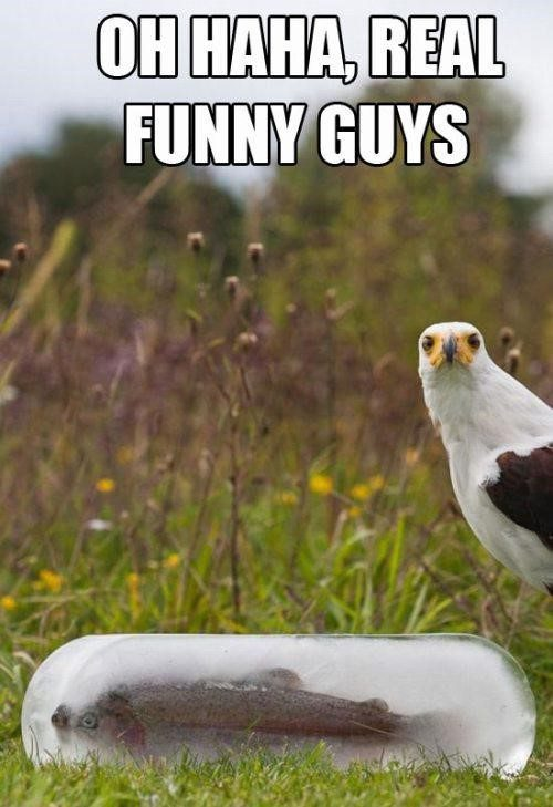 Real Funny Guys - really funny meme picture