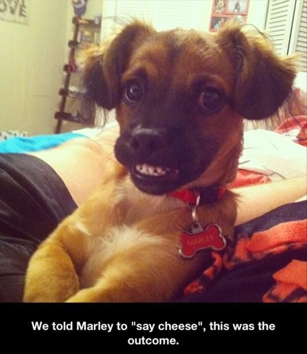 Say Cheese - Funny Photo