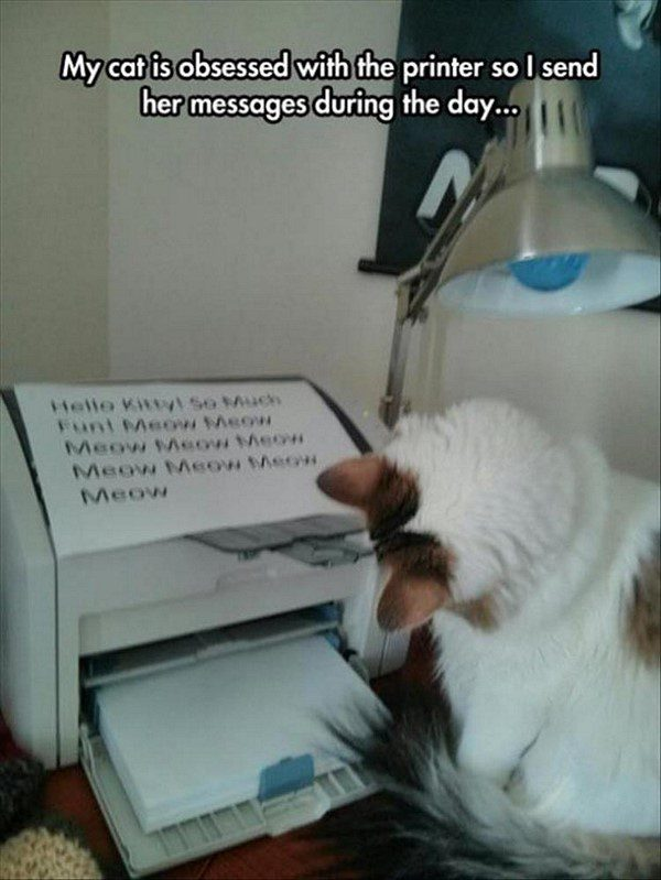 Cat Printer - funny animal picture