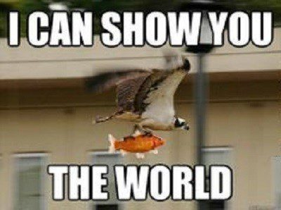 I Can Show You The World - Funny Image Meme