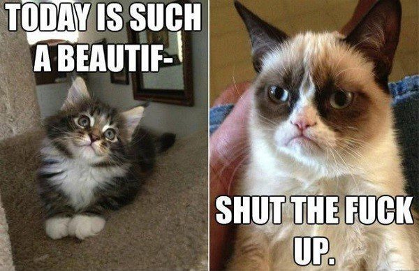 Today Is Such A Beautiful.... - Grumpy Cat Meme