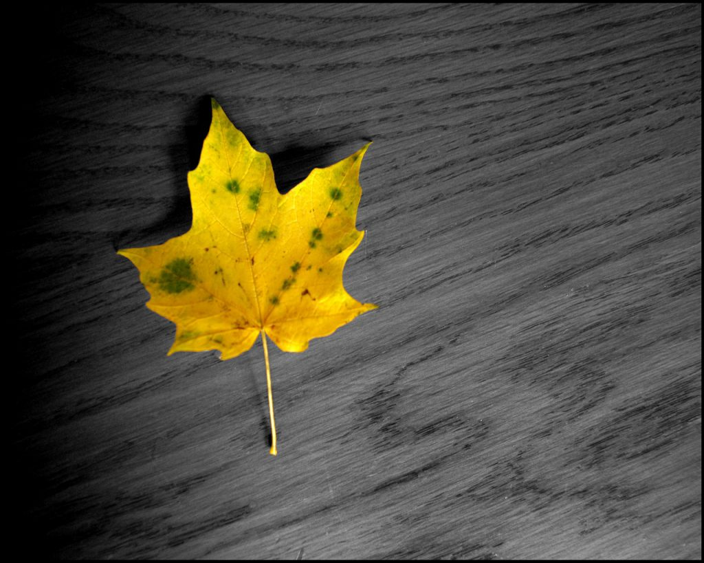 Yellow Leaf - HD Tablet Wallpaper Background