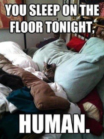 You Sleep On The Floor Human - Funny Picture