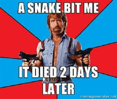 50 Funny Chuck Norris Jokes And Memes