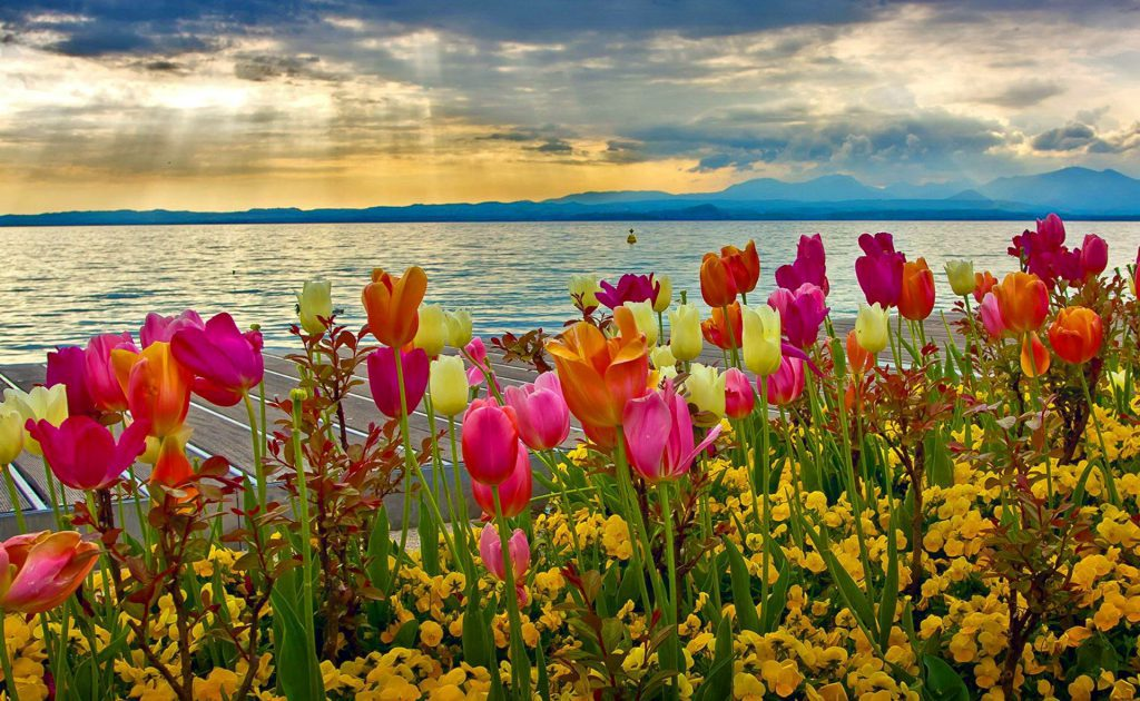 Spring Time Lake - Blooming Tulips with a beautiful sunrise over a lake - wallpaper