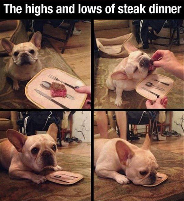 The Highs And Lows Of A Steak Dinner - funny animal picture