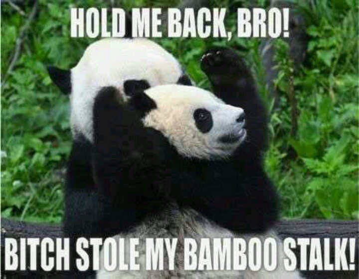 Hold Me Back Bro - Funny Panda Picture