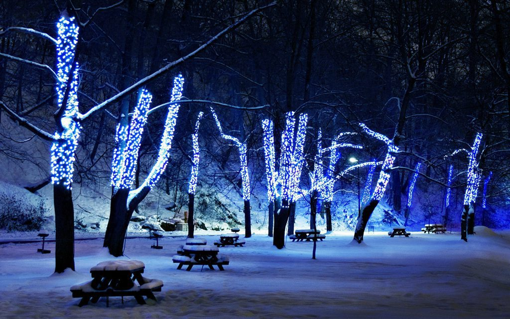 Trees With Christmas Lights - park at night