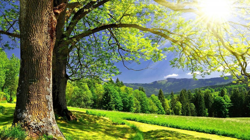 Beautiful Trees in the foreground with an amazing view of a forest and mountains in the background on a sunny day