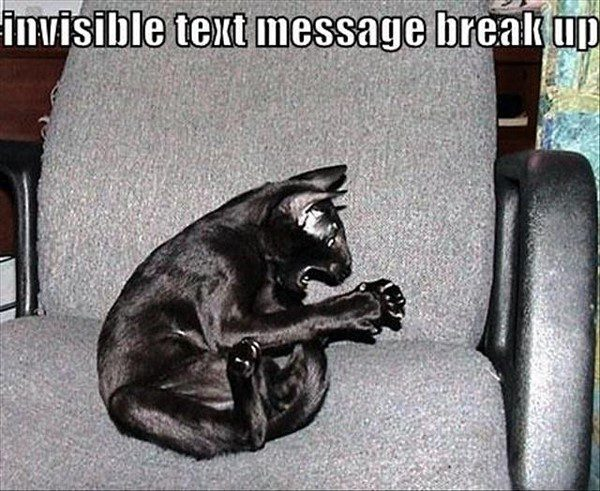 Invisible Text Message Break Up - Funny Cat Picture