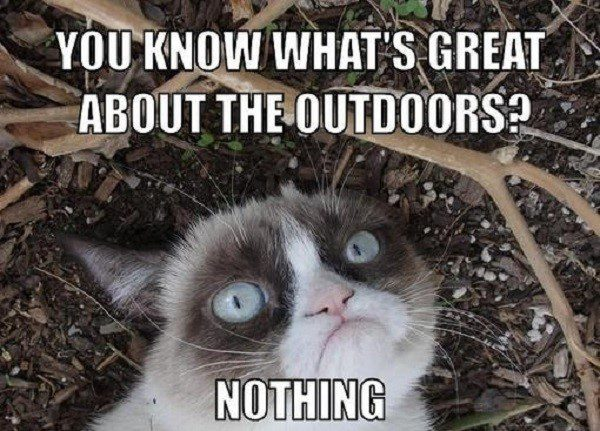 You Know What's Great About The Outdoors? Nothing. - grumpy cat meme