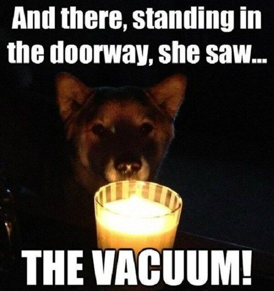 Dog Tells A Scary Story - Funny Caption Photo