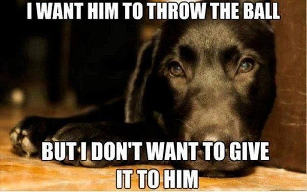 Want Him To Throw The Ball But... - Funny Animal Picture