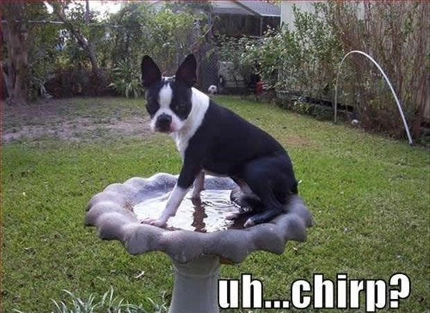 Funny Animal Pictures – Volume 2