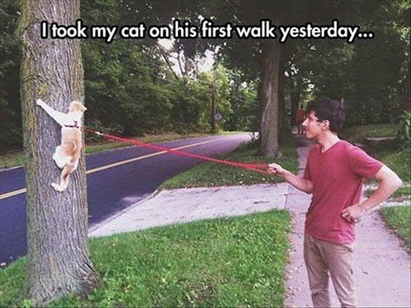Took My Cat For A Walk - funny animal picture