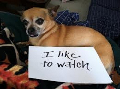 The 50 Best Dog Shaming Pictures