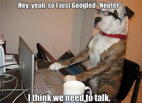 So, I Just Googled Neuter - Funny Dog Picture