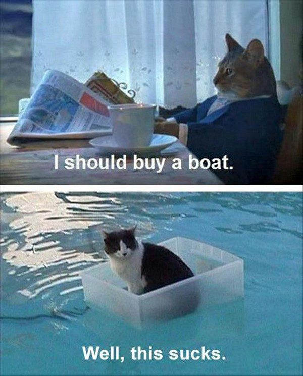 I Should Buy A Boat - funny animal picture