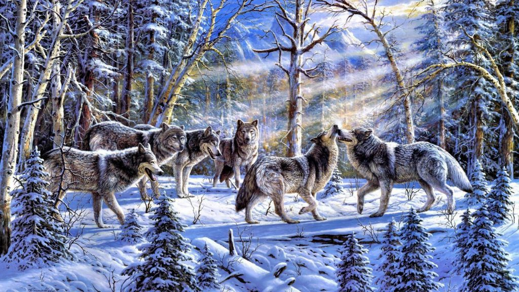 Pack Of Wolves In The Forest Wallpaper - desktop background