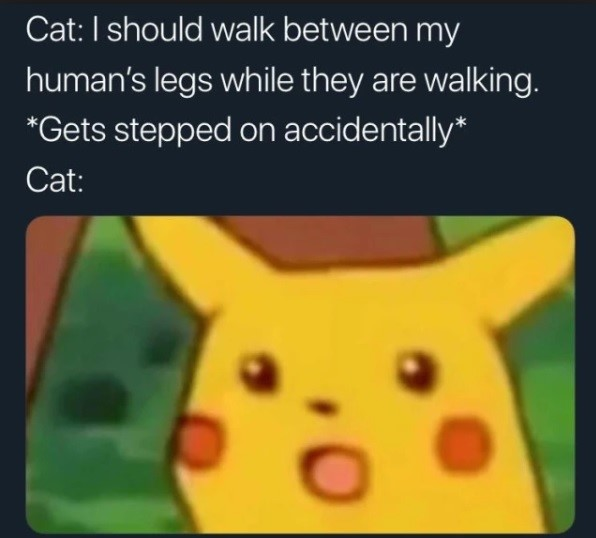Surprised Pikachu - cat walks between legs - gets stepped on