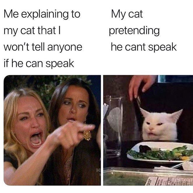 Cat Pretending He Cant Speak