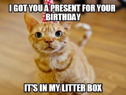 Got You A Present For Your Birthday Funny Birthday Cat