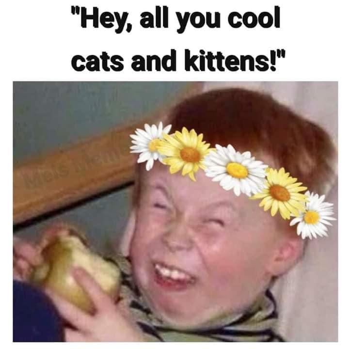 Cool Cats And Kittens 1