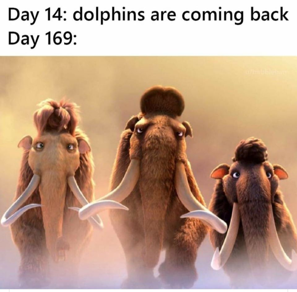 Dolphins Are Coming Back 1